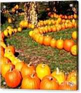 Pumpkin Patch Path Acrylic Print by Carol Groenen