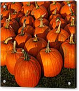 Pumpkin Pie Anyone Acrylic Print