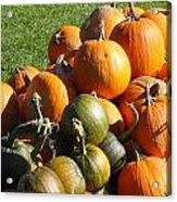 Pumpkin Pile  Acrylic Print