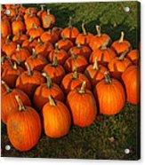Pumpkin Piles Acrylic Print