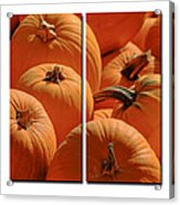 Pumpkin Pumpkin Acrylic Print