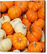 Pumpkin Squash Acrylic Print