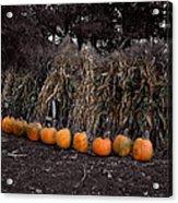 Pumpkins And Cornstalks Acrylic Print