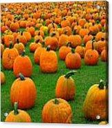 Pumpkins Forever Acrylic Print