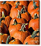 Pumpkins Galore Acrylic Print