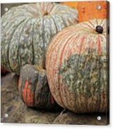 Pumpkins Galore V1 Acrylic Print