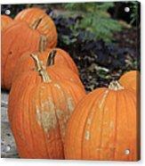 Pumpkins Galore V2 Acrylic Print