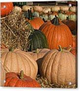 Pumpkins Pumpkins Everywhere Acrylic Print