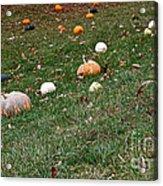 Pumpkins Acrylic Print by Susan Herber