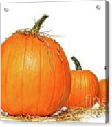 Pumpkins With Straw On White  Acrylic Print