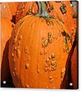 Pumpkinville Acrylic Print