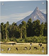 Puntiagudo Volcano In The Background Acrylic Print