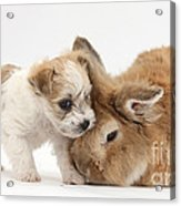 Pup And Rabbit Acrylic Print