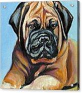 Pup For Ben Acrylic Print
