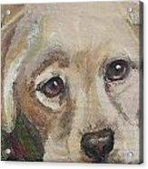 Pup Acrylic Print