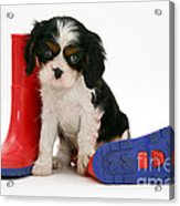 Puppies With A Childs Rain Boots Acrylic Print