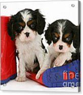 Puppies With Rain Boats Acrylic Print