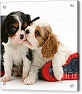 Puppies With Rain Boots Acrylic Print by Jane Burton