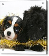 Puppies With Tinsel Acrylic Print