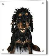Puppy Bathtime Acrylic Print