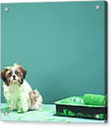 Puppy Covered In Green Paint From Paint Tray Acrylic Print