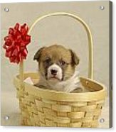 Puppy In A Basket Acrylic Print
