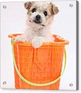 Puppy In Bucket Acrylic Print