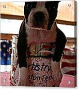 Puppy Kit Acrylic Print