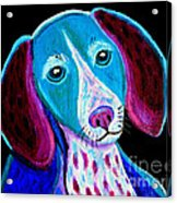 Puppy Love Acrylic Print by Nick Gustafson