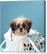 Puppy Sitting In Handbag Acrylic Print