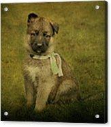 Puppy Sitting Acrylic Print