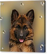 Puppy With Bubbles Acrylic Print