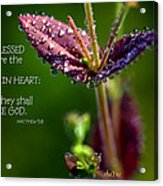 Pure In Heart Acrylic Print