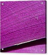 Pure Purple Acrylic Print