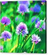 Purple And Green Chive Watercolor Acrylic Print