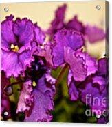 Purple And More Purple Acrylic Print