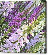 Purple And White Foxglove Square Acrylic Print