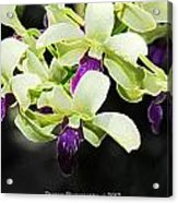 Purple And White Orchid Accent Fx  Acrylic Print