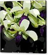 Purple And White Orchid Fx  Acrylic Print