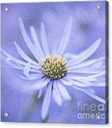 Purple Aster Flower Acrylic Print