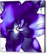 Purple Blast Acrylic Print