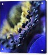 Purple Bulb Flower Acrylic Print