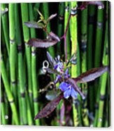 Blue Bursts From Bamboo Acrylic Print