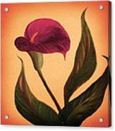 Purple Calla Lily - Square Painting Acrylic Print