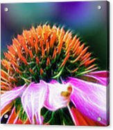 Purple Coneflower Delight Acrylic Print by Bill Tiepelman
