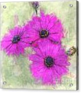 Purple Daisy Trio Watercolor Photoart Acrylic Print