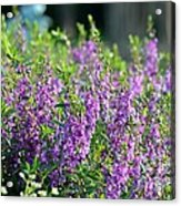 Purple English Garden  Acrylic Print