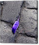 Purple Feather Acrylic Print