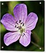 Purple Flower 1 Acrylic Print