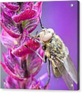Purple Flower Fly Acrylic Print